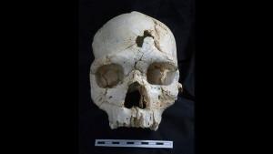 430,000 year old murder