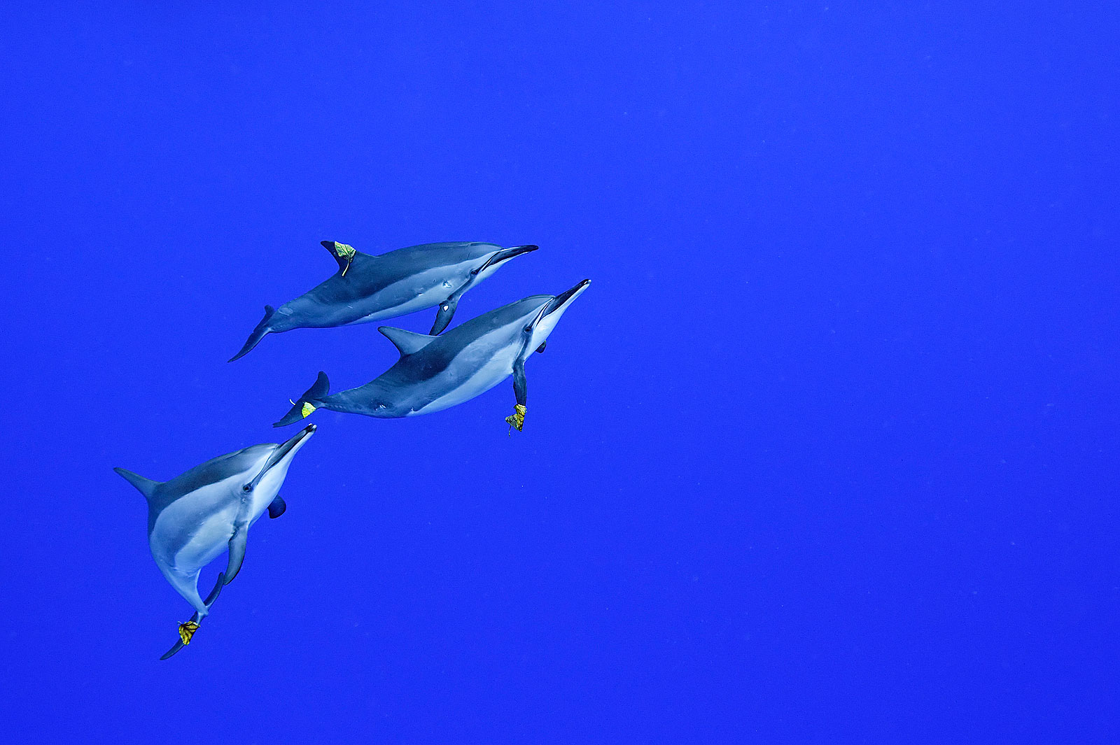 an essay about dolphins Unlike most editing & proofreading services, we edit for everything: grammar, spelling, punctuation, idea flow, sentence structure, & more get started now.