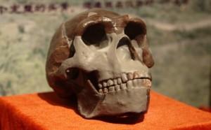 pekin-man-skull-2